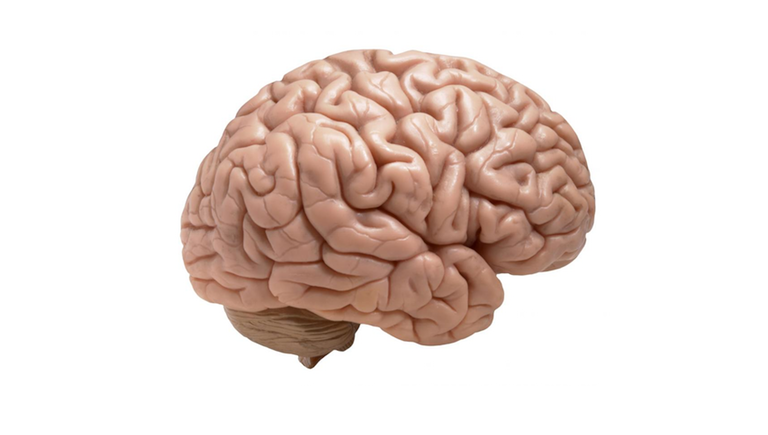 memory techniques brain